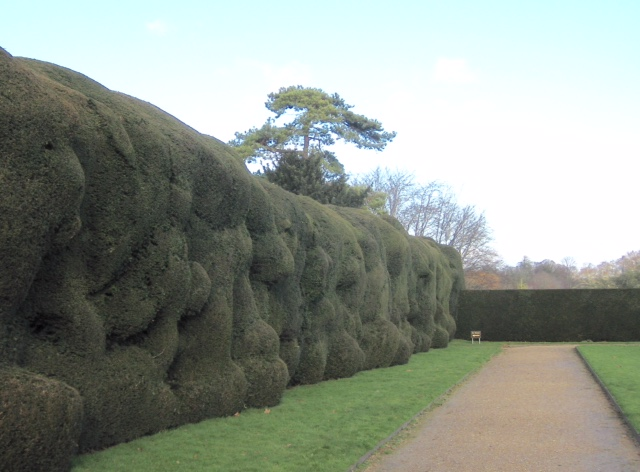 lightened hedge